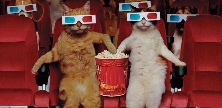 'Как работает кинотеатр?'