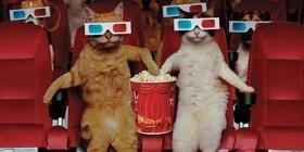 Статья 'Как работает кинотеатр?'