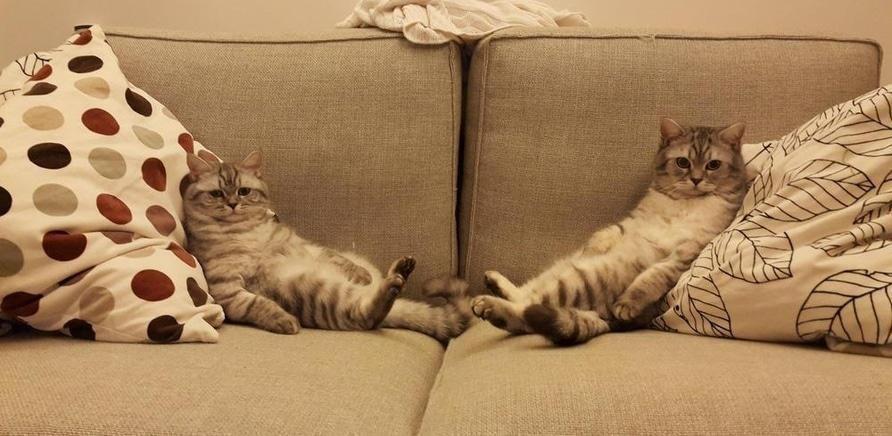 'Выбираем диван: 6 лайфхаков для покупателей'