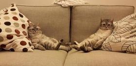 Статья 'Выбираем диван: 6 лайфхаков для покупателей'