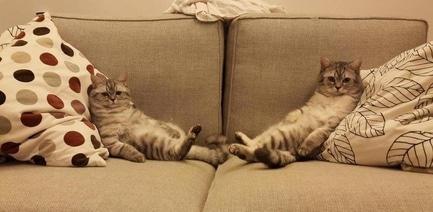 'Стройся!' - статья Выбираем диван: 6 лайфхаков для покупателей