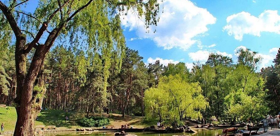"""Парк """"Сосновый бор"""". Фото. Костырко"""
