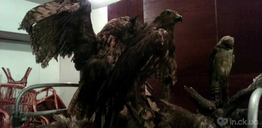 Фото 1 - Чучела зверей и птиц покрылись плесенью от влаги