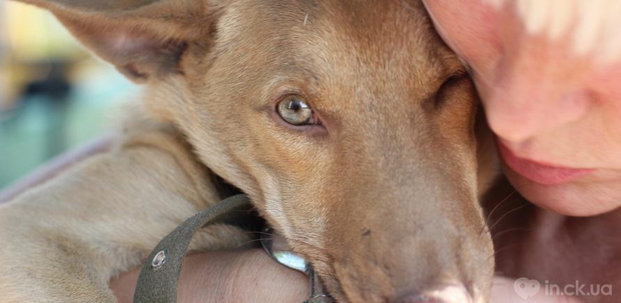 Фото 3 - Черкащанка десять років рятує безпритульних тварин