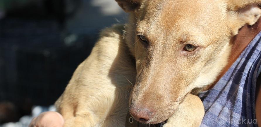 Фото 4 - Черкащанка десять років рятує безпритульних тварин
