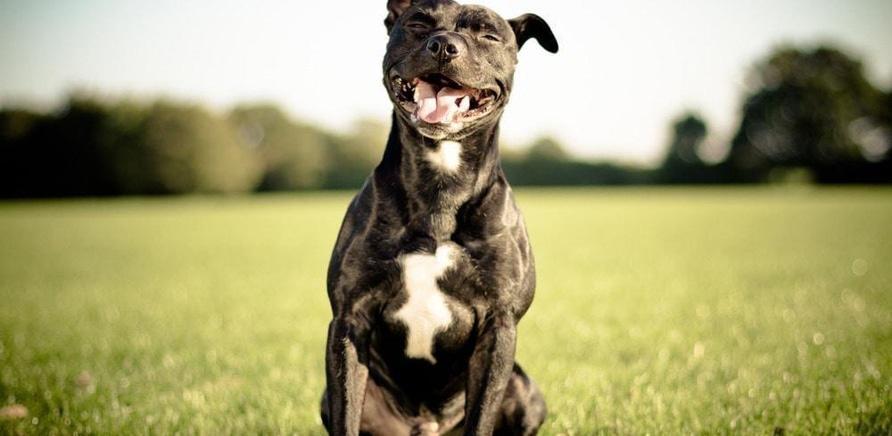 'В Черкассах хотят обустроить специальные площадки для выгула и дрессировки собак'