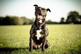 Статья 'В Черкассах хотят обустроить специальные площадки для выгула и дрессировки собак'