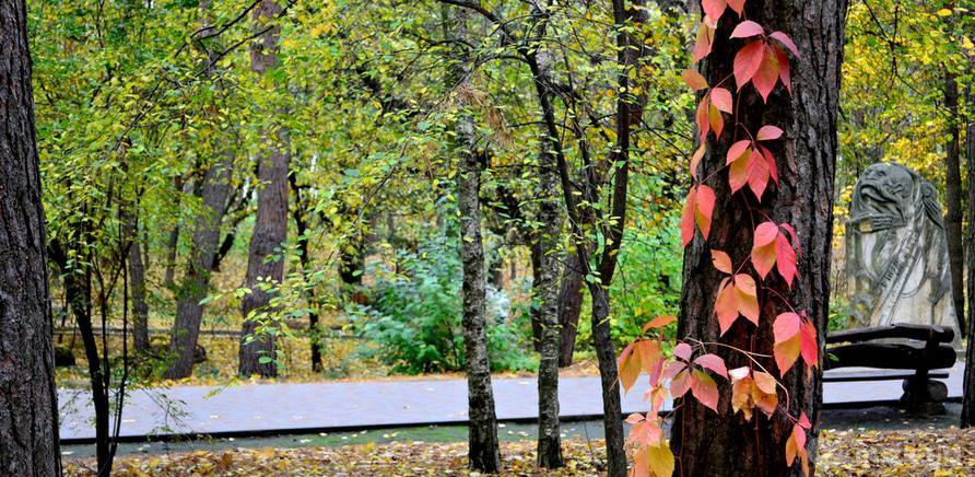 """Фото 5 - Парк """"Сосновий бір"""""""