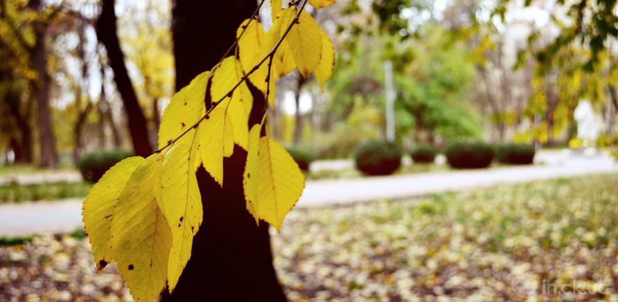 Фото 4 - Соборний парк