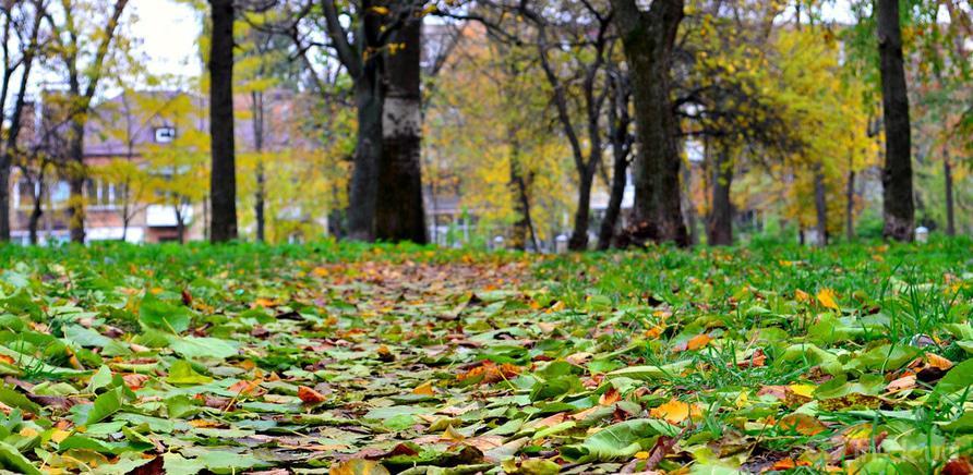 Фото 6 - Соборний парк