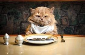 Статья '11 интересных фактов о питании кошек и собак'