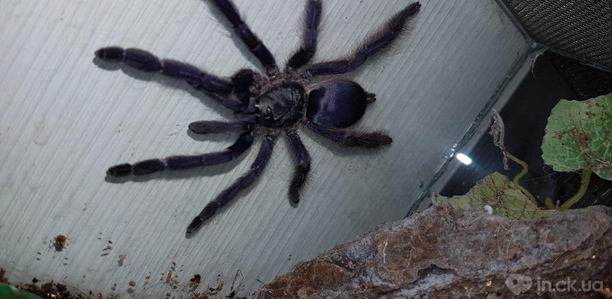Фото 5 - Пауки, ящерицы, скорпион и питон: у школьницы дома живет несколько десятков экзотических любимцев