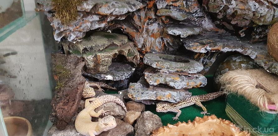Фото 2 - Пауки, ящерицы, скорпион и питон: у школьницы дома живет несколько десятков экзотических любимцев