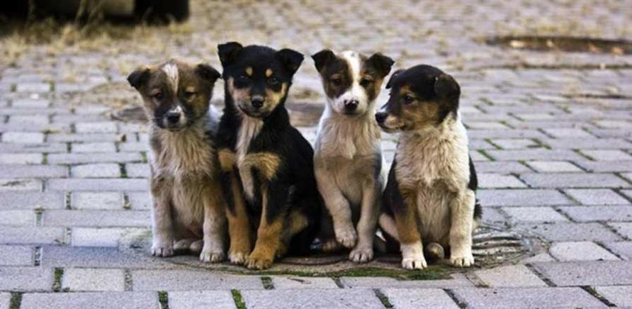 'Черкассы могут присоединиться к онлайн-сервису помощи бездомным животным'