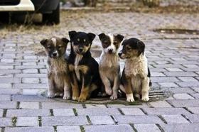 Статья 'Черкассы могут присоединиться к онлайн-сервису помощи бездомным животным'