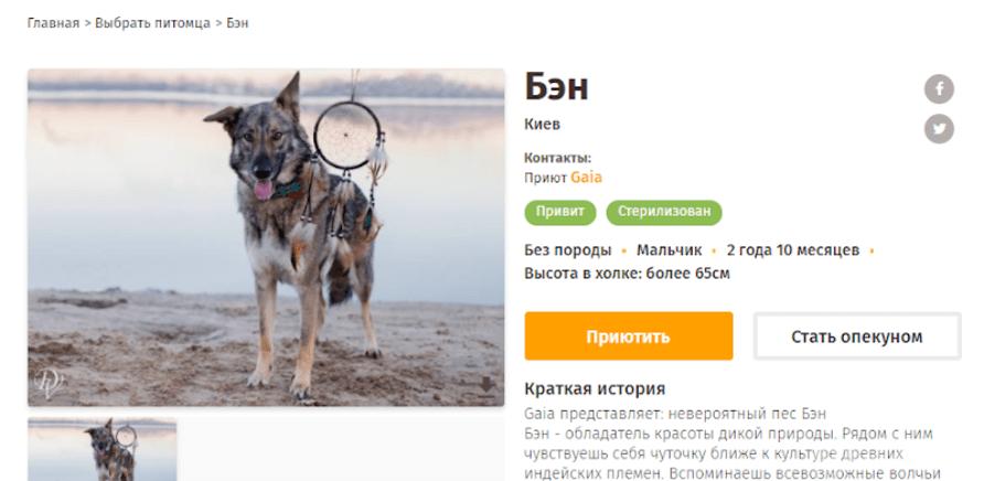 Фото 2 - Черкассы могут присоединиться к онлайн-сервису помощи бездомным животным
