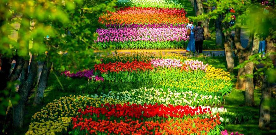 Фото 1 - Тюльпановый рай в Кропивницкому. Фото – www.0629.com.ua