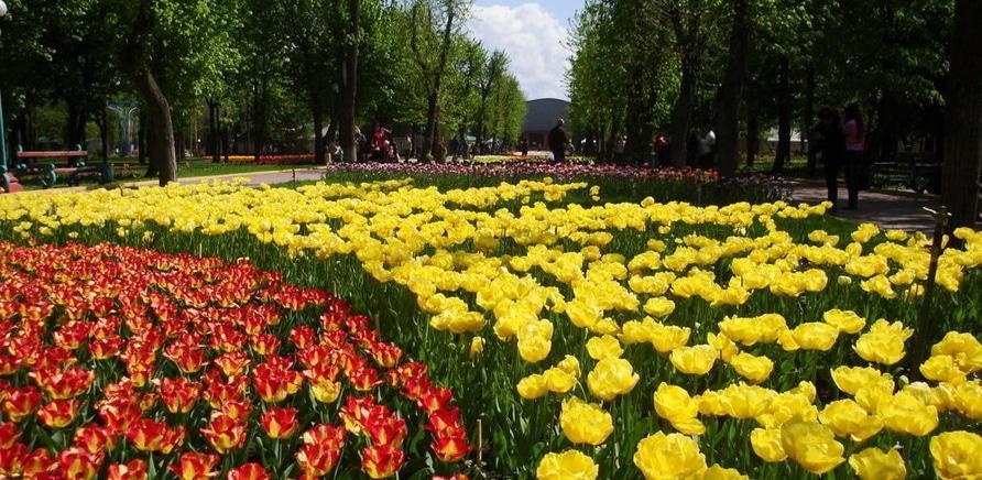 Фото 5 - Тюльпановый рай в Кропивницкому. Фото – Masha Kovalchuk, lookmytrips.com
