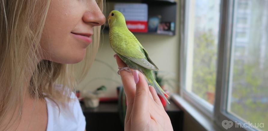 Фото 3 - За жизнью попугаев Тоши и Лаймы наблюдает почти 78 тысяч подписчиков. Фото из личного архива Виктории Черныш