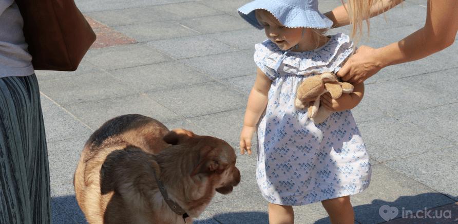 Фото 4 - Украина – не живодерня: горожане вышли на защиту бездомных животных
