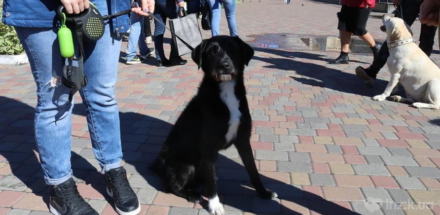 Фото 4 - Выйди за меня: в Черкассах прошел марш в защиту прав животных