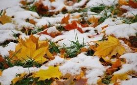 Статья 'Только спокойно: вскоре в Черкассах выпадет мокрый снег'