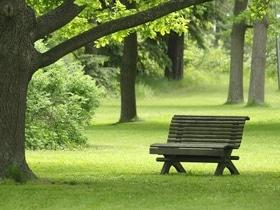 Статья 'Лесная песня: в Черкассах появился новый парк'