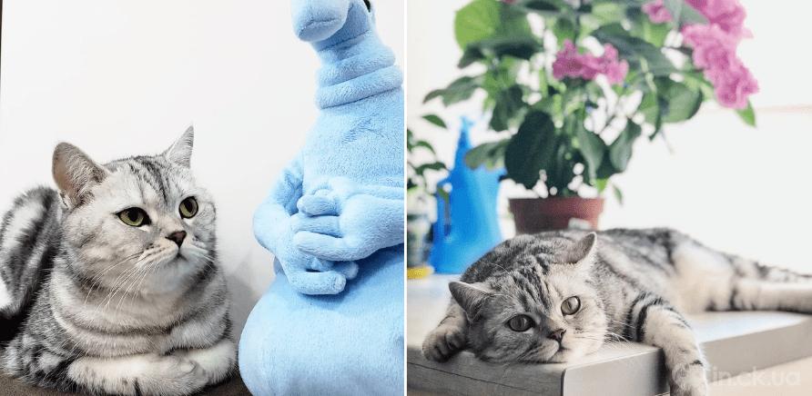 Фото 1 - Инсталапы: обзор аккаунтов котиков и собак из Черкасс