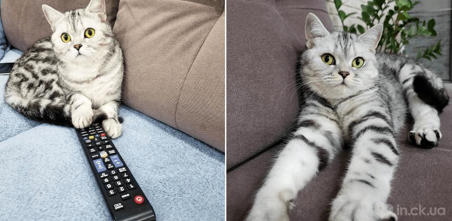 Фото 2 - Инсталапы: обзор аккаунтов котиков и собак из Черкасс