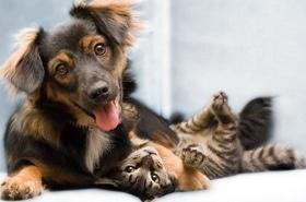 Друг, черкасское городское общество защиты животных