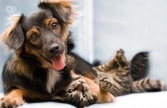 Фото 1 - Черкасское городское общество защиты животных Друг