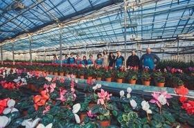 Цветочные теплицы, цветы оптом и в розницу