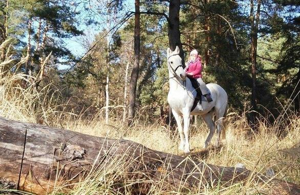 Фото 2 - Домашняя конюшня PEGAS