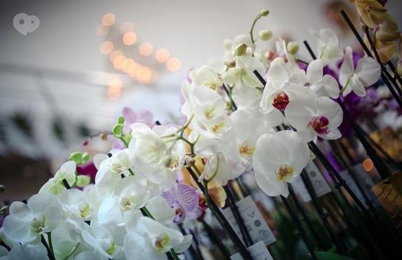 Фото 6 - Цветочный дом Букет