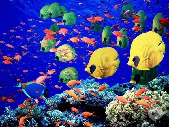 Выставка - Киевская выставка рыб