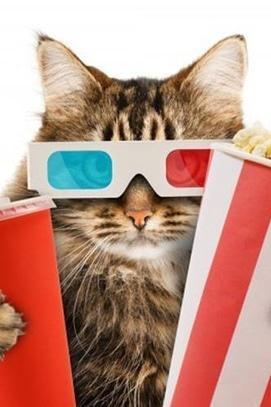 Фильм - КотоКиноВечера в 'Cat Cafe'
