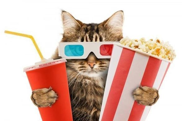 Фільм - КотоКіноВечори в 'Cat Cafe'