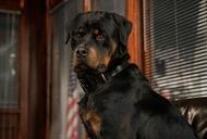 Фильм'Полицейский пес' - кадр 1