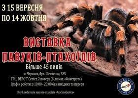 """Выставка пауков-птицеедов """"АрахноЭкзотика"""""""