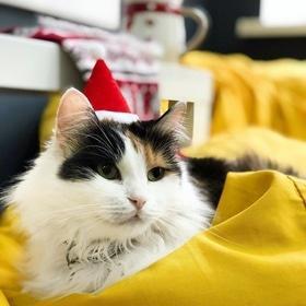 'Новий рік  2021' - Вечірка 'На свято Миколая' в Cat Cafe