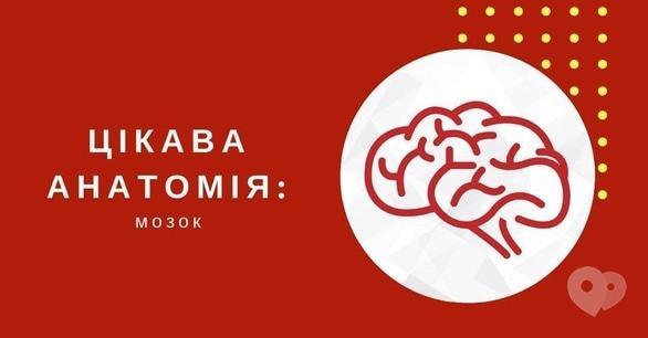 Для детей - Мастер-класс 'Интересная анатомия. Головной мозг'