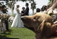 Фільм'Очима собаки' - кадр 3