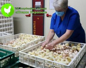Фішка Інкубаційна станція Птахи України