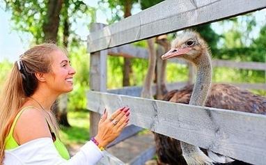 Щедра Долина, база отдыха - Экскурсия на ферму страусов (взрослые)