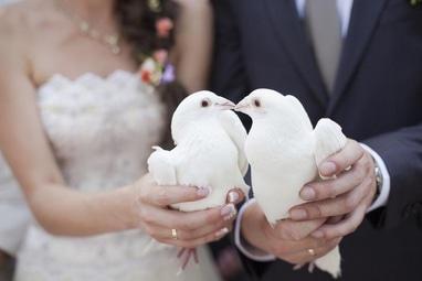 Агентство праздников ИЗУМРУДНЫЙ ГОРОД, организация торжеств - Голуби на свадьбу