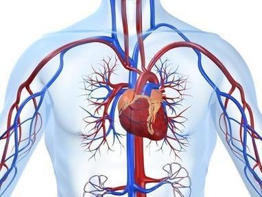Академия здоровья, оздоровительный центр - Укрепление сердечно-сосудистой, дыхательной, мочеполовой и имунной систем организма человека по методике д.м.н. Бубновского С.М.