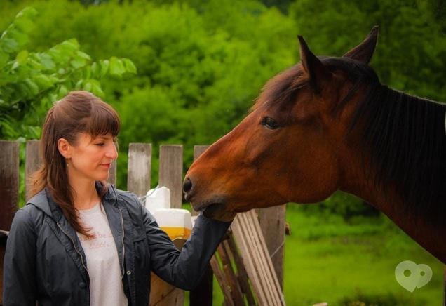 PEGAS, домашняя конюшня - Кормление лошадей лакомствами