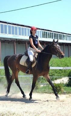 Сван, конно-спортивный клуб - Катание на больших и маленьких лошадях