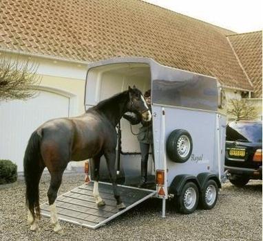 Сван, конно-спортивный клуб - Перевозки лошадей по Украине и зарубеж
