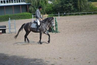 Сван, конно-спортивный клуб - Мастер-классы по различным дисциплинам конного спорта